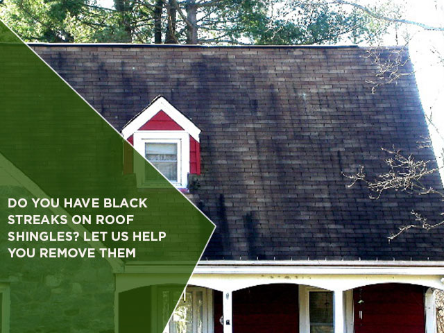Do You Have Black Streaks On Roof Shingles Let Us Help